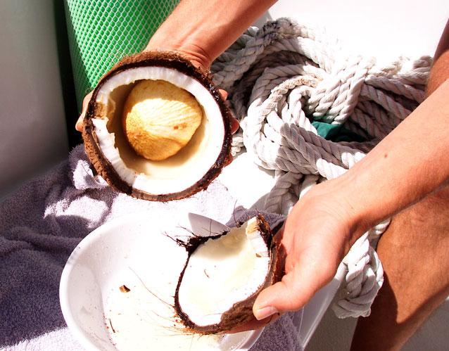 How Does a Coconut Grow